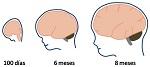 Medula espinhal divisao anatomica